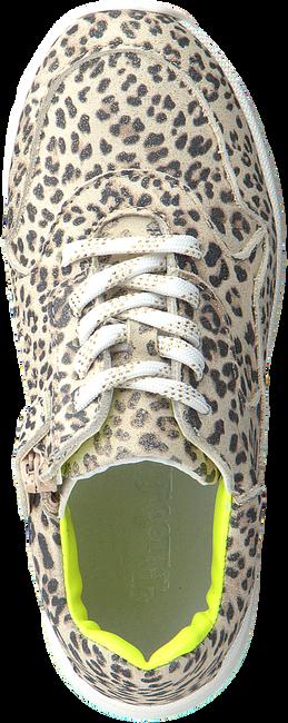 Beige PINOCCHIO Sneaker low P1253  - large